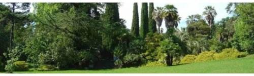 Jardín y huerto